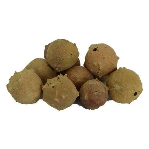 Doğal Mazı Meyve Kozalağı 100 Gr Paket